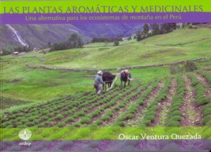 Plantas-aromaticas 2